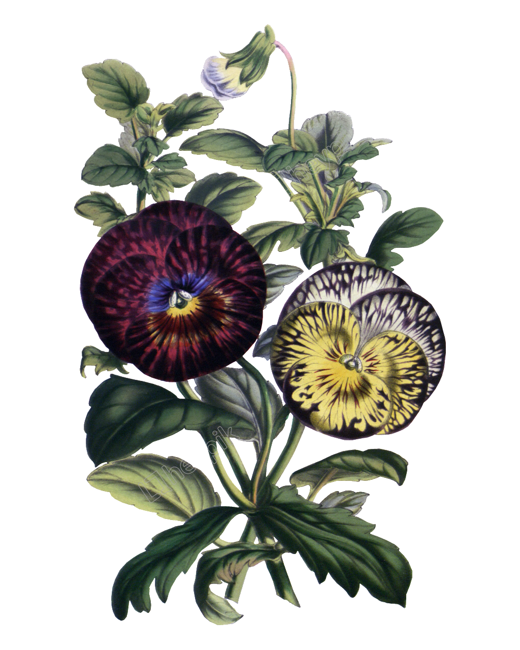 Hd gorgeous painted flowers. Vintage flower vector png vector freeuse library