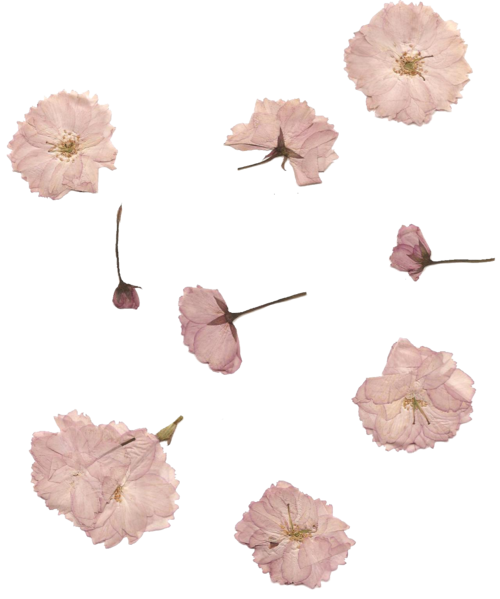 Vintage flowers tumblr png. Cute white pink transparent