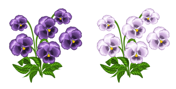 Violet clipart. Free cliparts african download