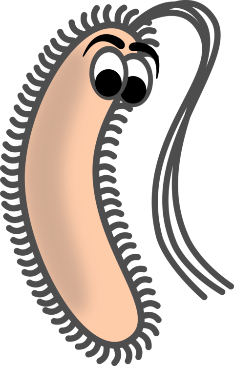 Cell clipart colouring in. Image result for microbiologist