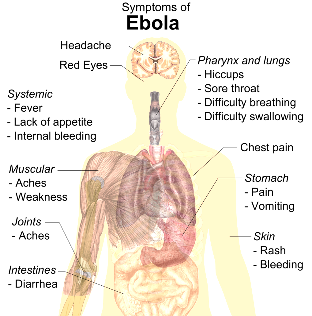 Virus transparent human body. Biology diagrams images pictures