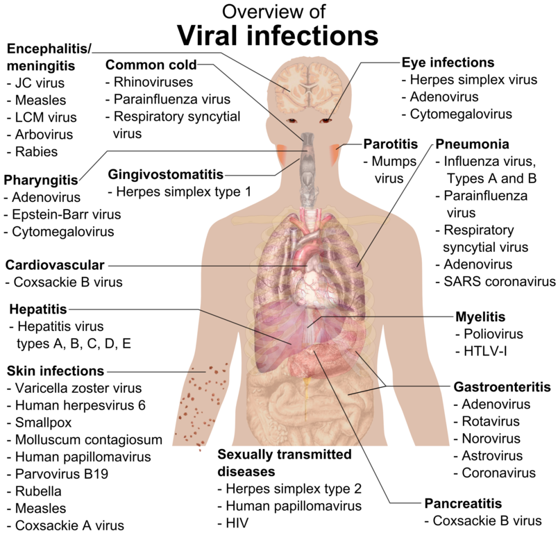Virus transparent human body. File viral infections and