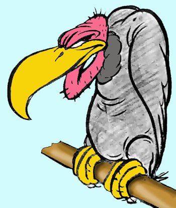Vulture clipart draw. Vultures drawing at getdrawings