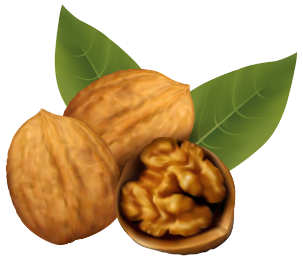 Walnuts png clipart image. Walnut vector vector free library