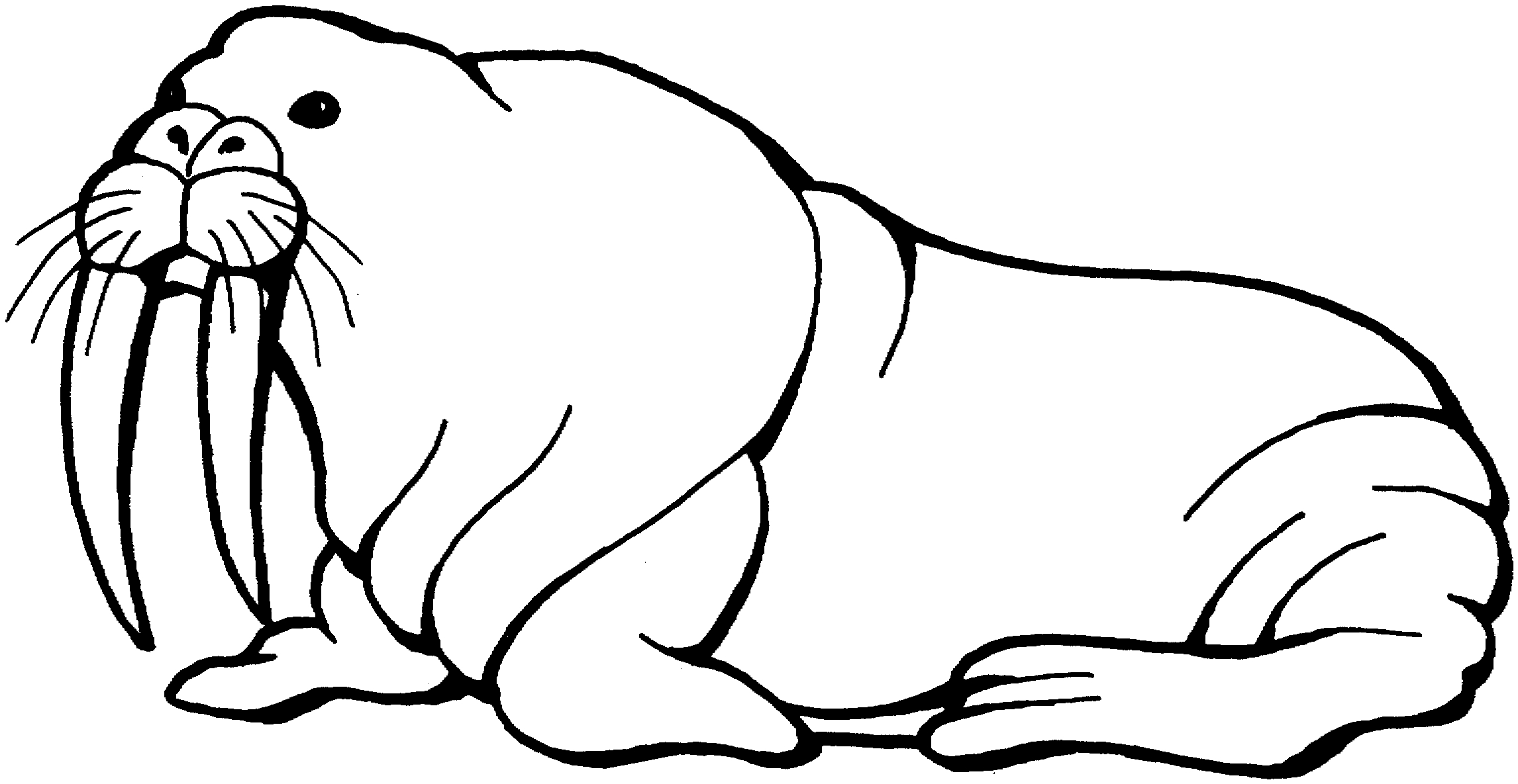 New collection digital coloring. Walrus clipart black and white