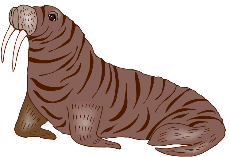 Free clip art library. Walrus clipart jpg free library