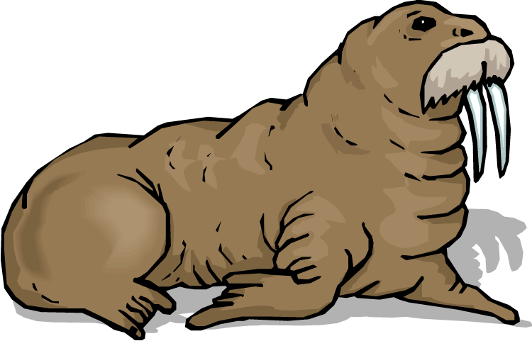 Panda free images info. Walrus clipart clipart library stock