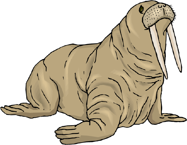 Walrus clipart swimming. The top best blogs