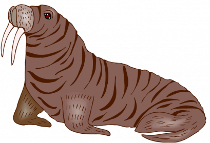 Walrus transparent. Png images free download