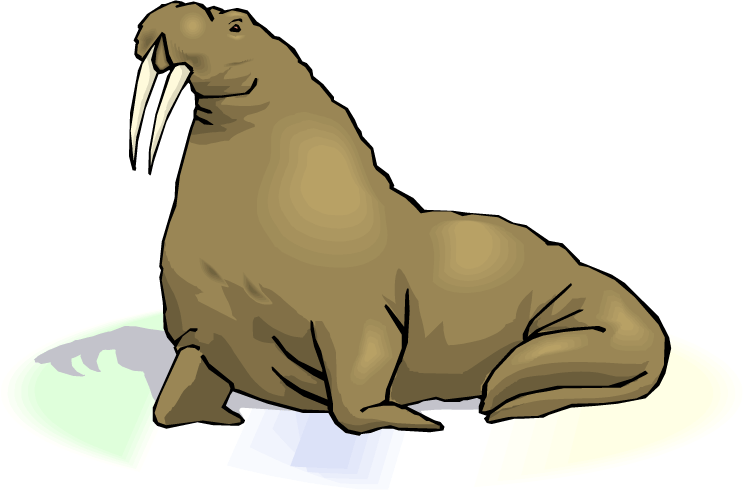 Walrus transparent. Download free png images