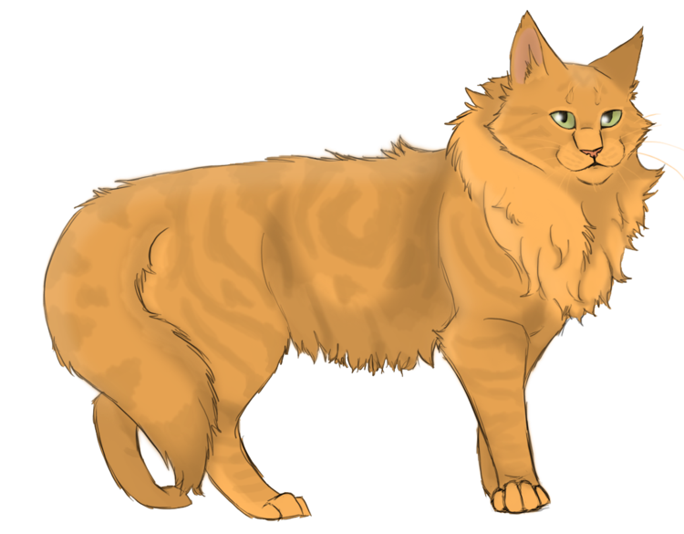 warrior cats omen of the stars new covers png