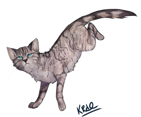 Png version of warrior cats. Image warriors jayfeather by
