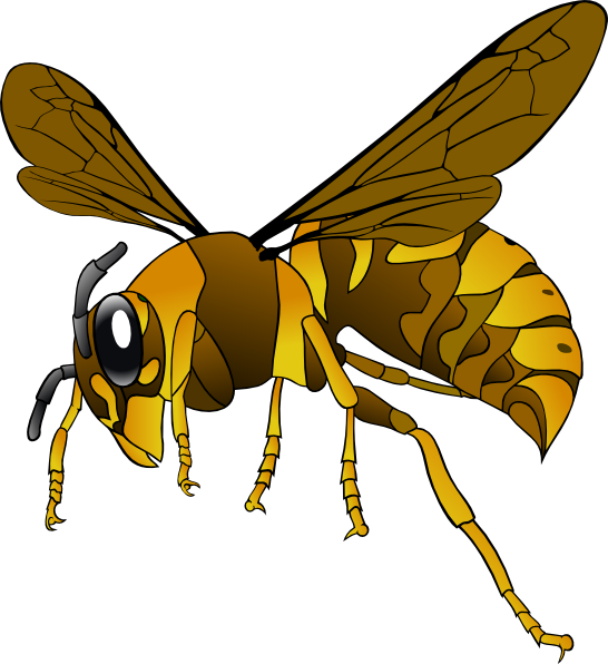 Wasp vector cartoon. Brown yellow hornet clip
