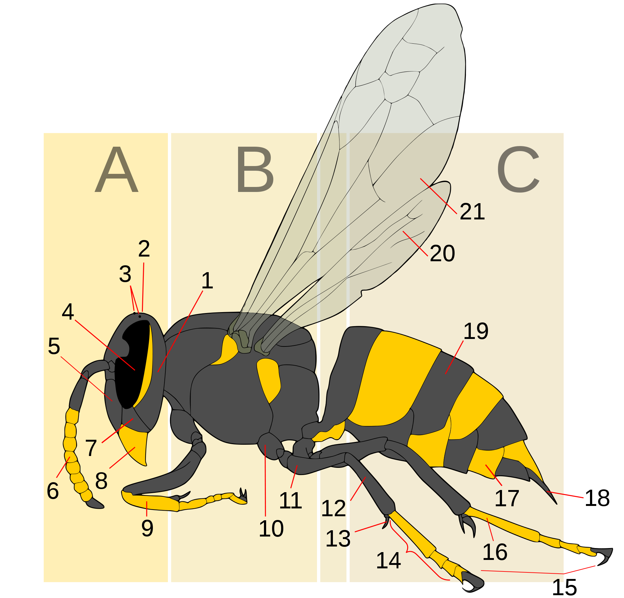 Wasp vector svg. File morphology generic text