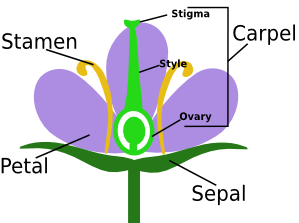 watch clipart stamen