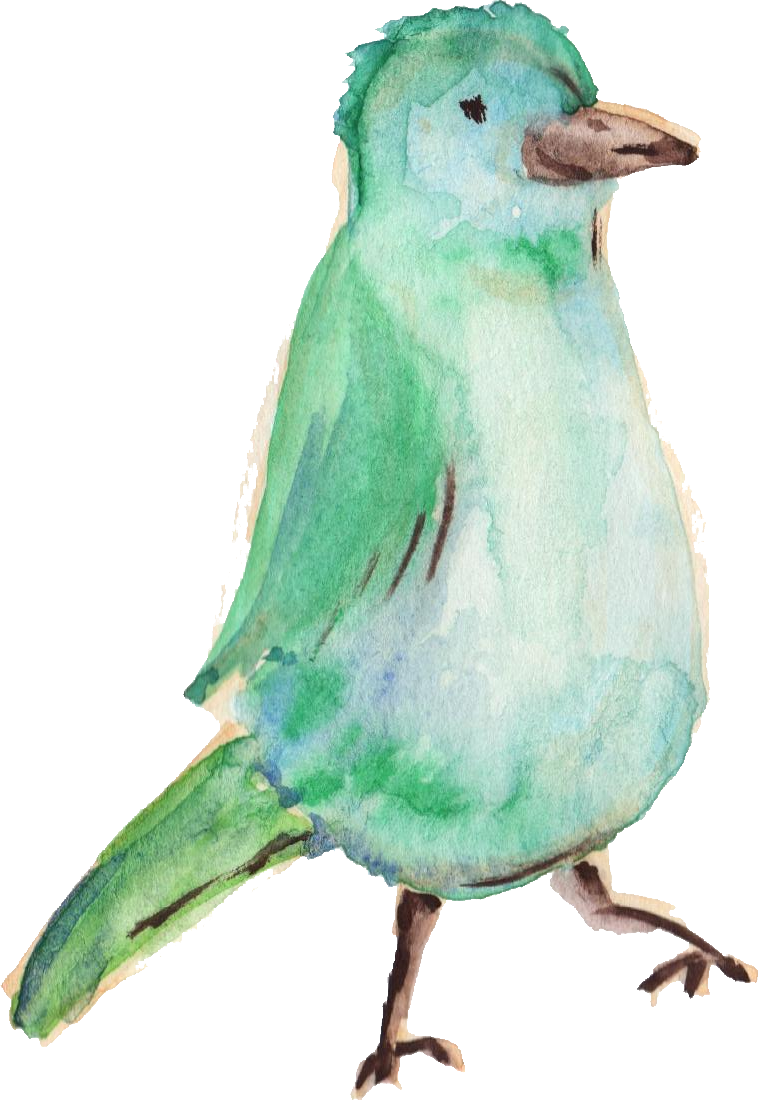 Water color bird png. Watercolor transparent onlygfx