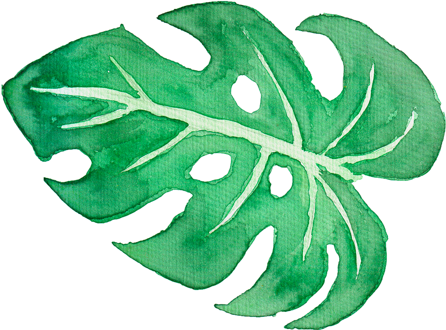 Watercolor palm leaves png. Download tropical on behance