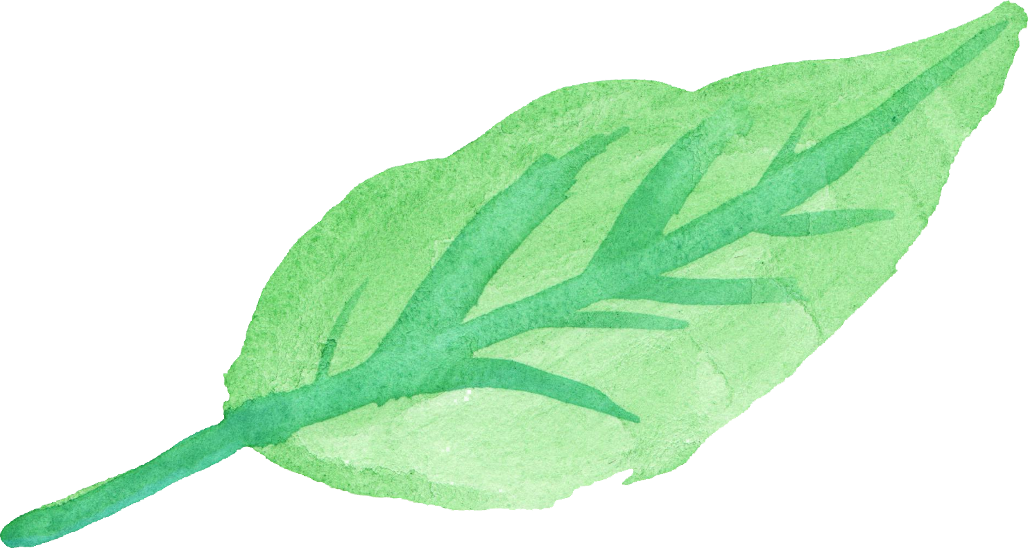 Watercolor leaves png