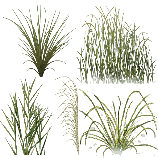 Vegetation drawing pond plant. Png water plants buscar