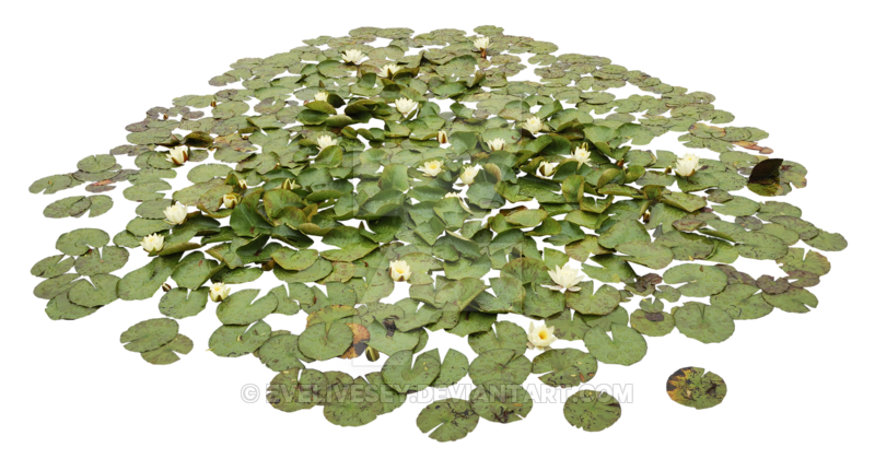 Water plant png. Waterlily pond by evelivesey