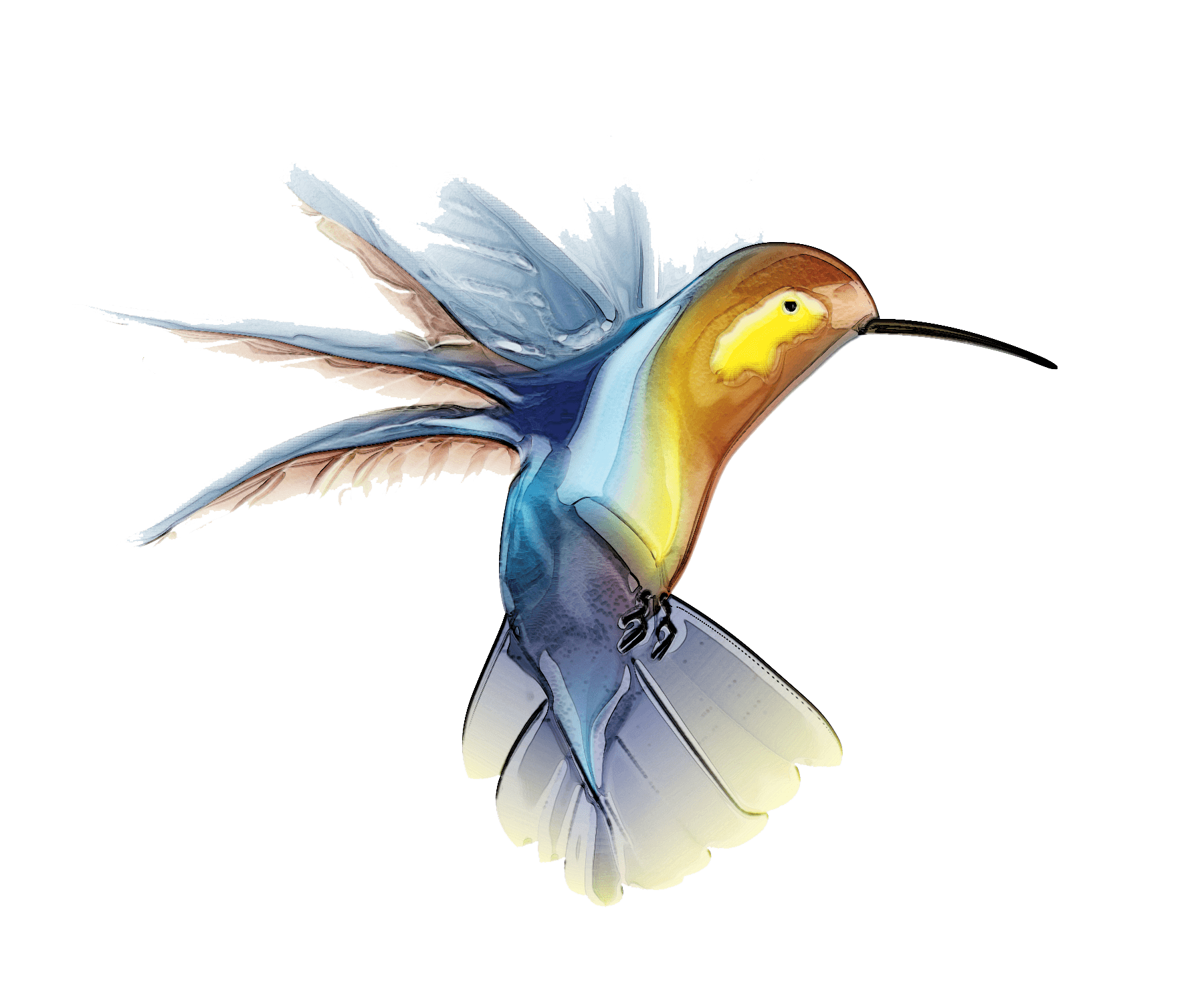 Watercolor bird png. Hummingbird tattoo transparent stickpng