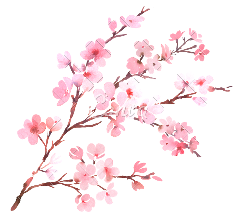Watercolor branch png. With spring tree in
