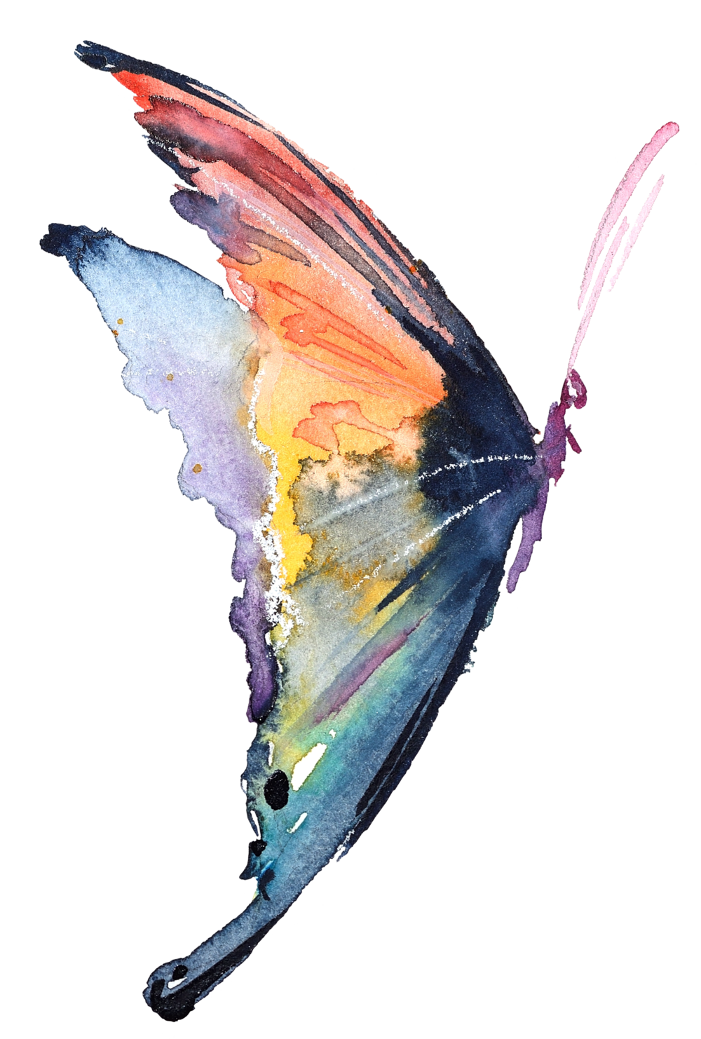Watercolor butterfly png. Carolynn s reflexology painting