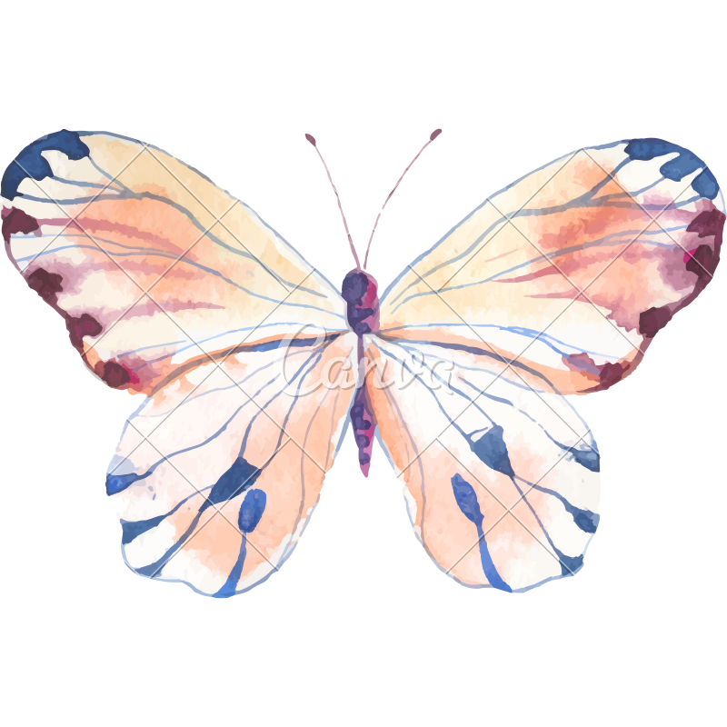 Watercolor butterfly png. Illustration icons by canva