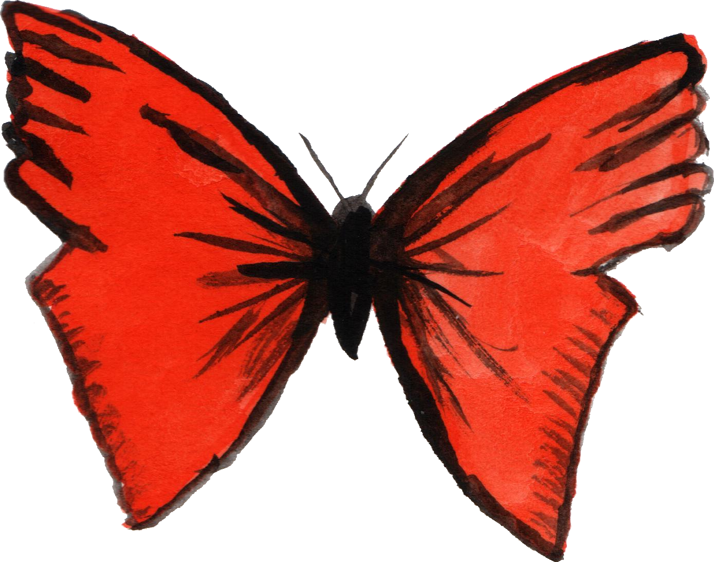 Watercolor butterfly png. Transparent onlygfx com
