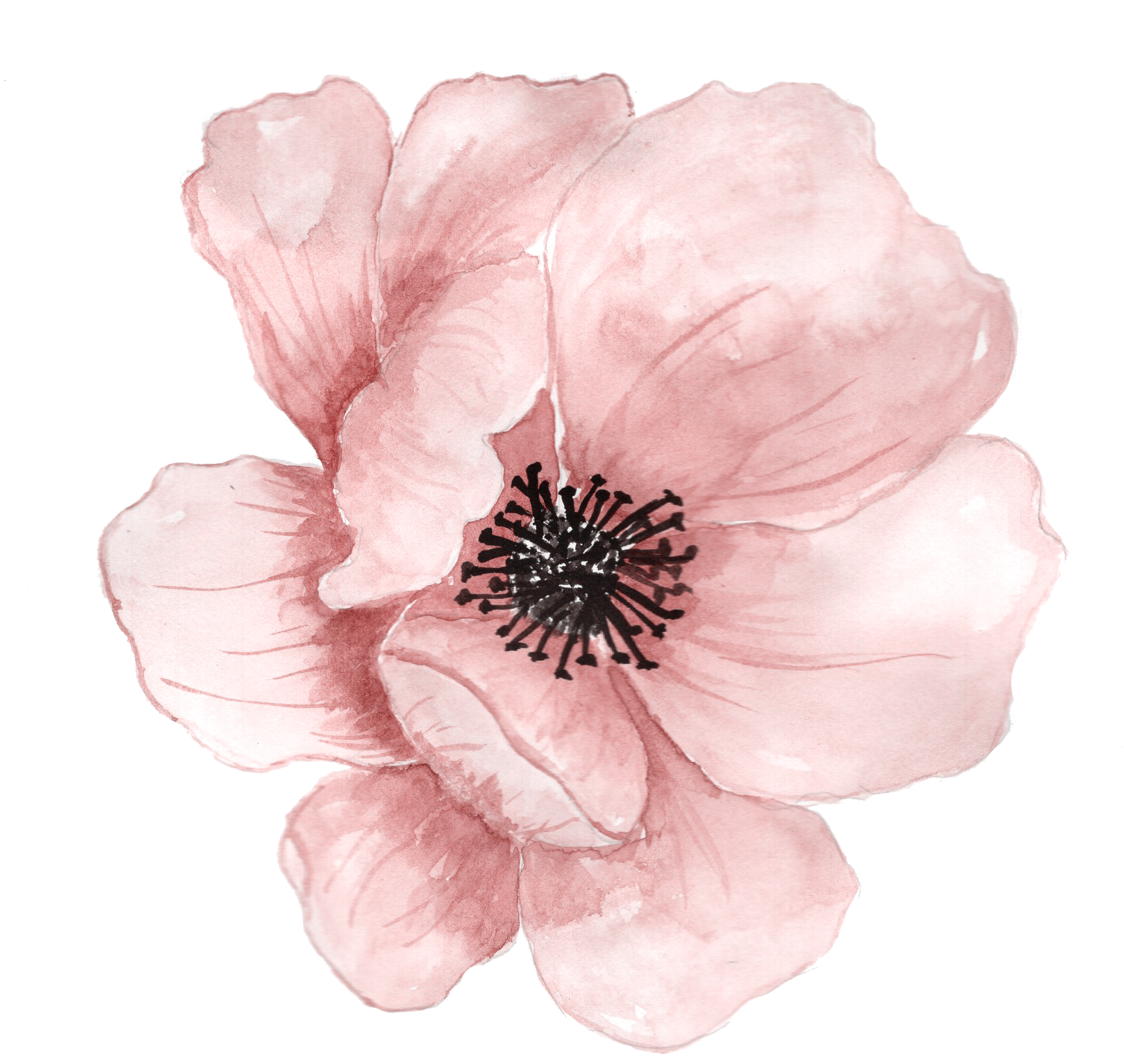Watercolor flower png. Painting clip art pink