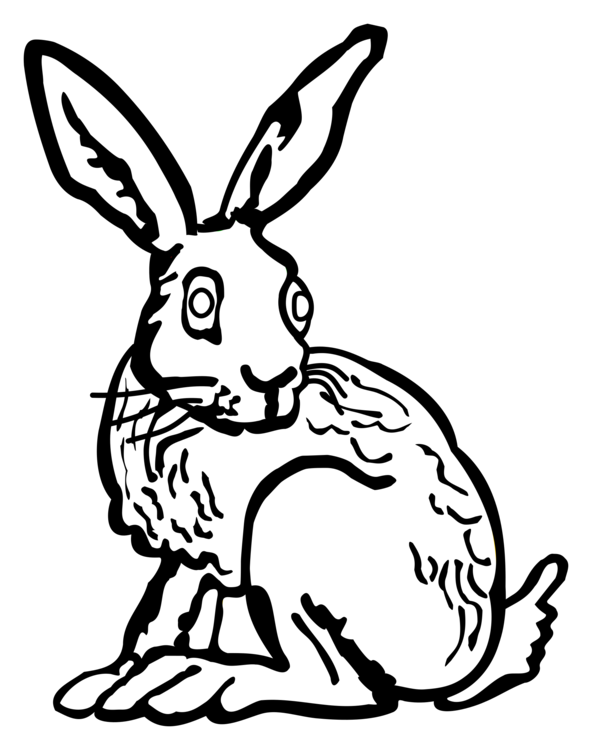 Hares drawing outline. Domestic rabbit hare black