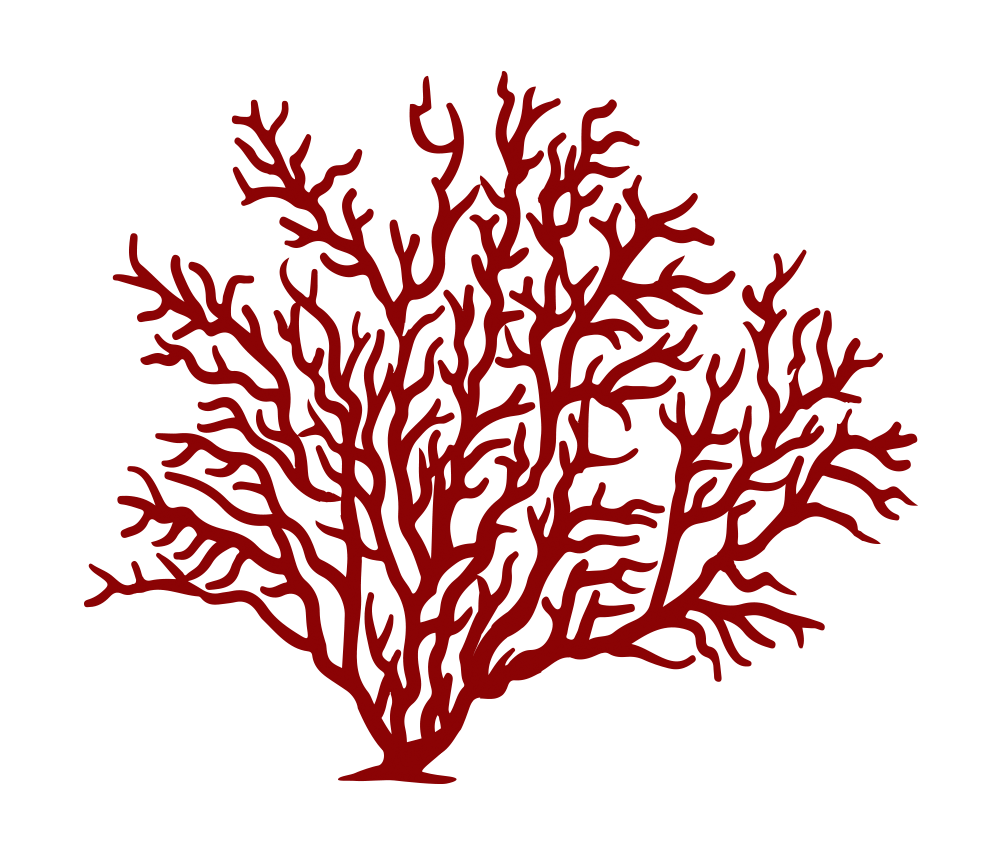 Watercolor coral png. Image result for fan