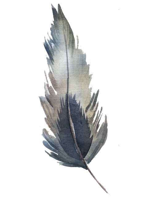 Watercolor feather png. Transprent free download plant