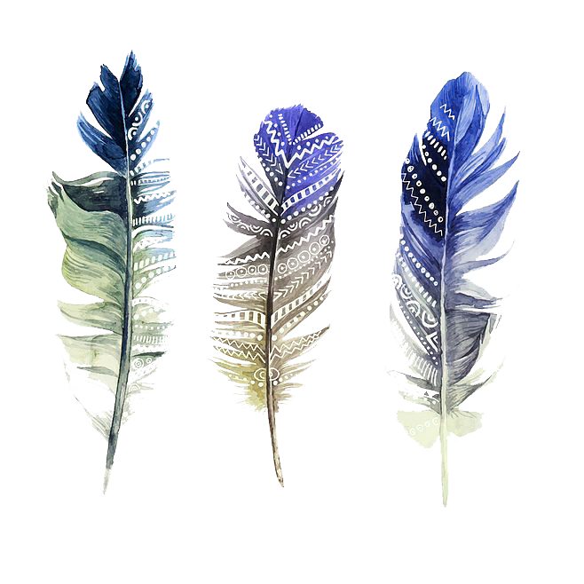 Watercolor feather png. Painting illustration transprent free