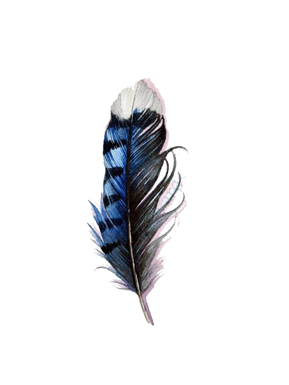 Watercolor feathers png. Bird tattoo feather blue