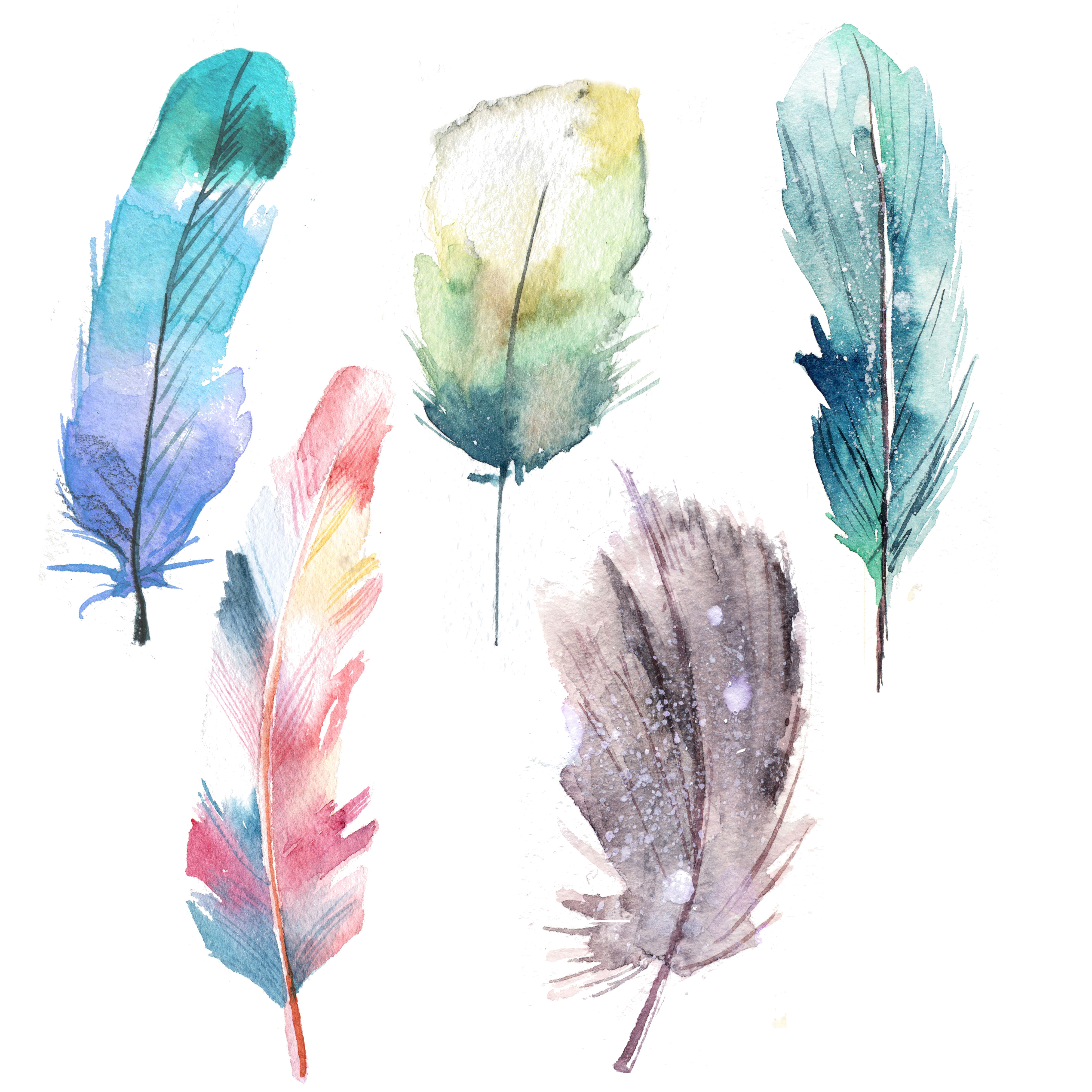 Watercolor feathers png. Feather painting blue transprent