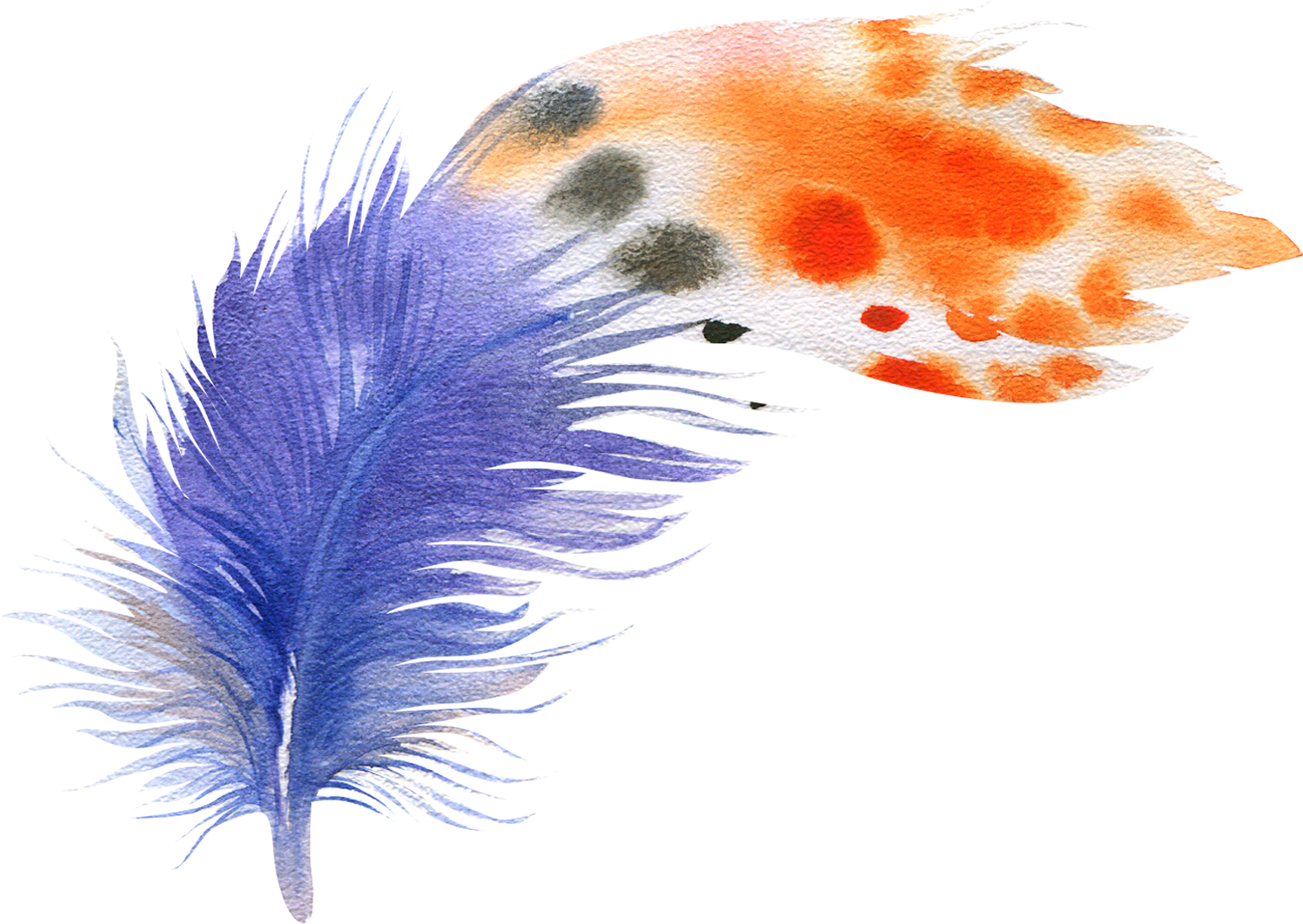 Watercolor feathers png. Bird feather painting drawing
