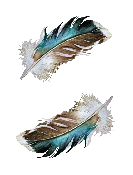 Watercolor feathers png. Pin by alexandra alves