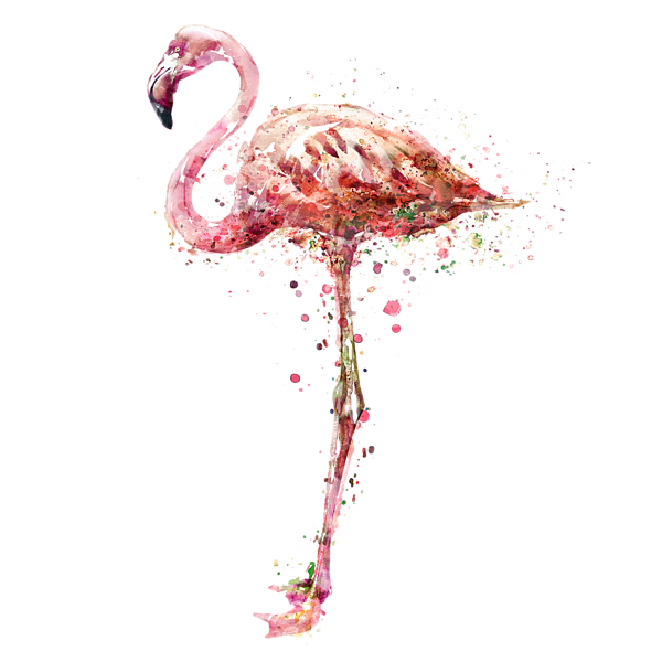 watercolor flamingo png