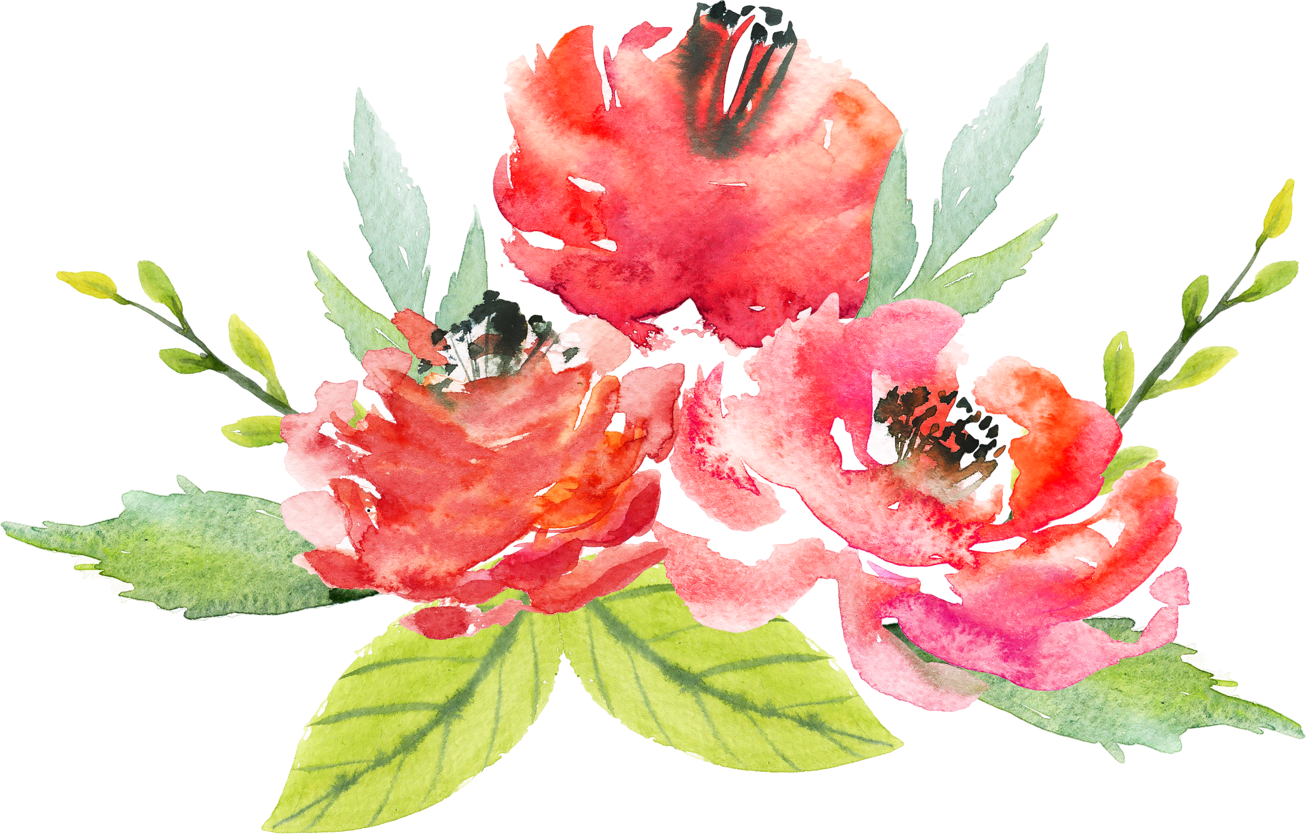 Watercolor flowers png. Floral design flower painting