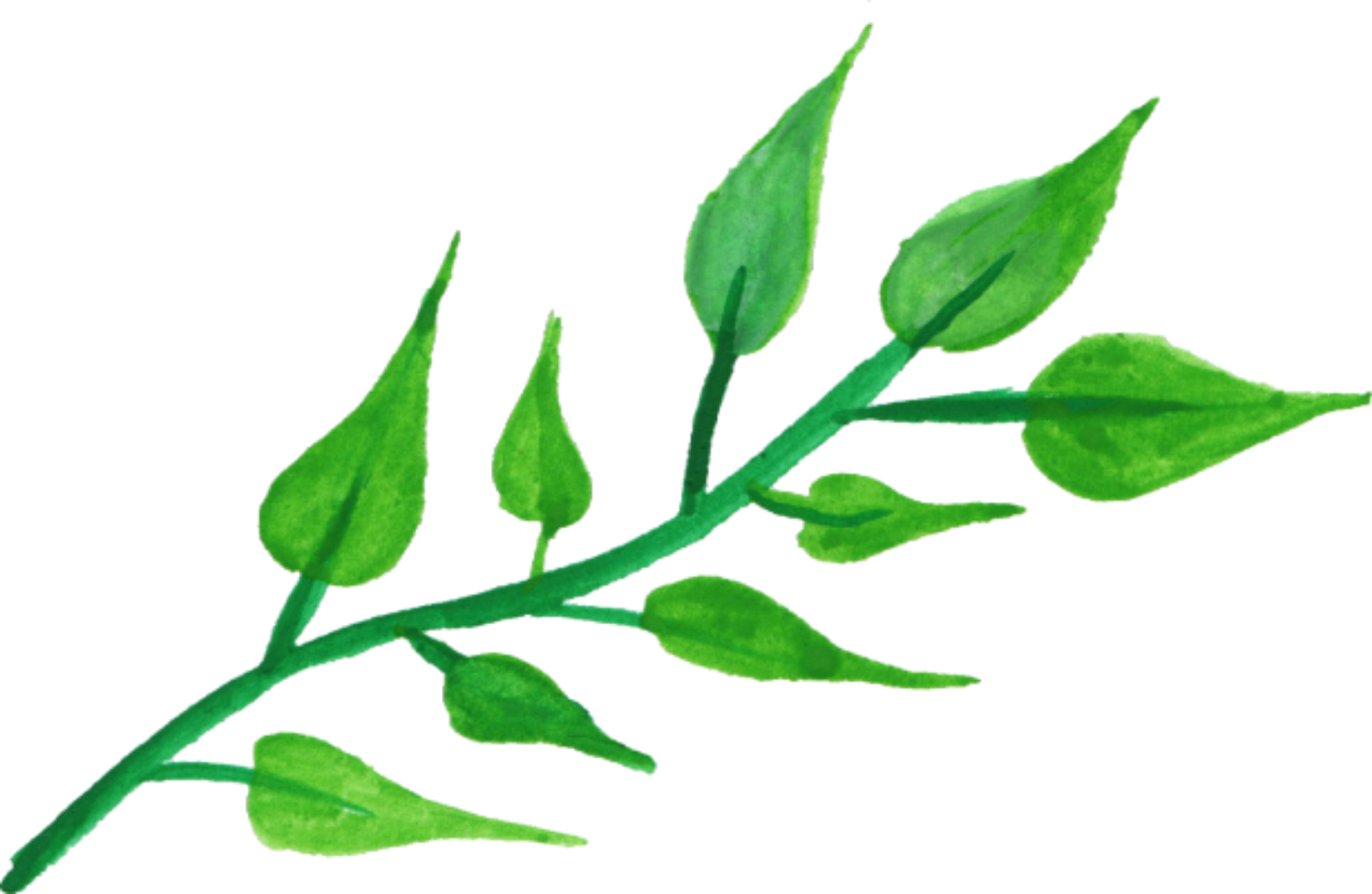 Watercolor greenery png. Ftestickers floral report abuse