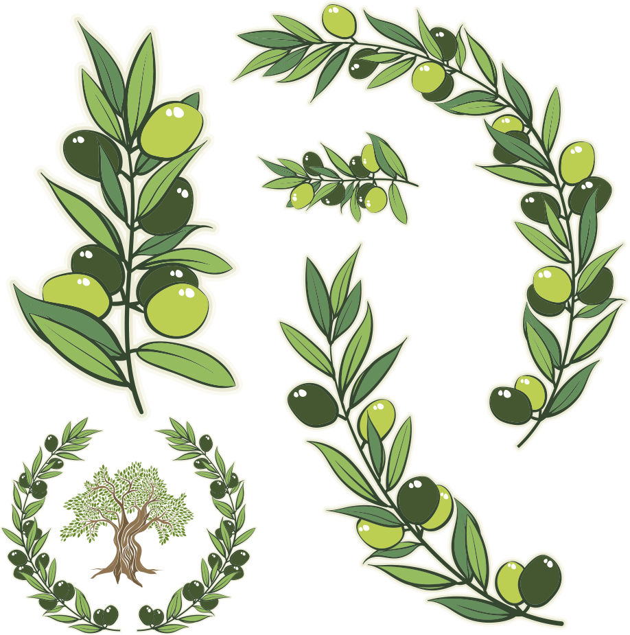 Catnip drawing herb wreath. Olive branch stock photography