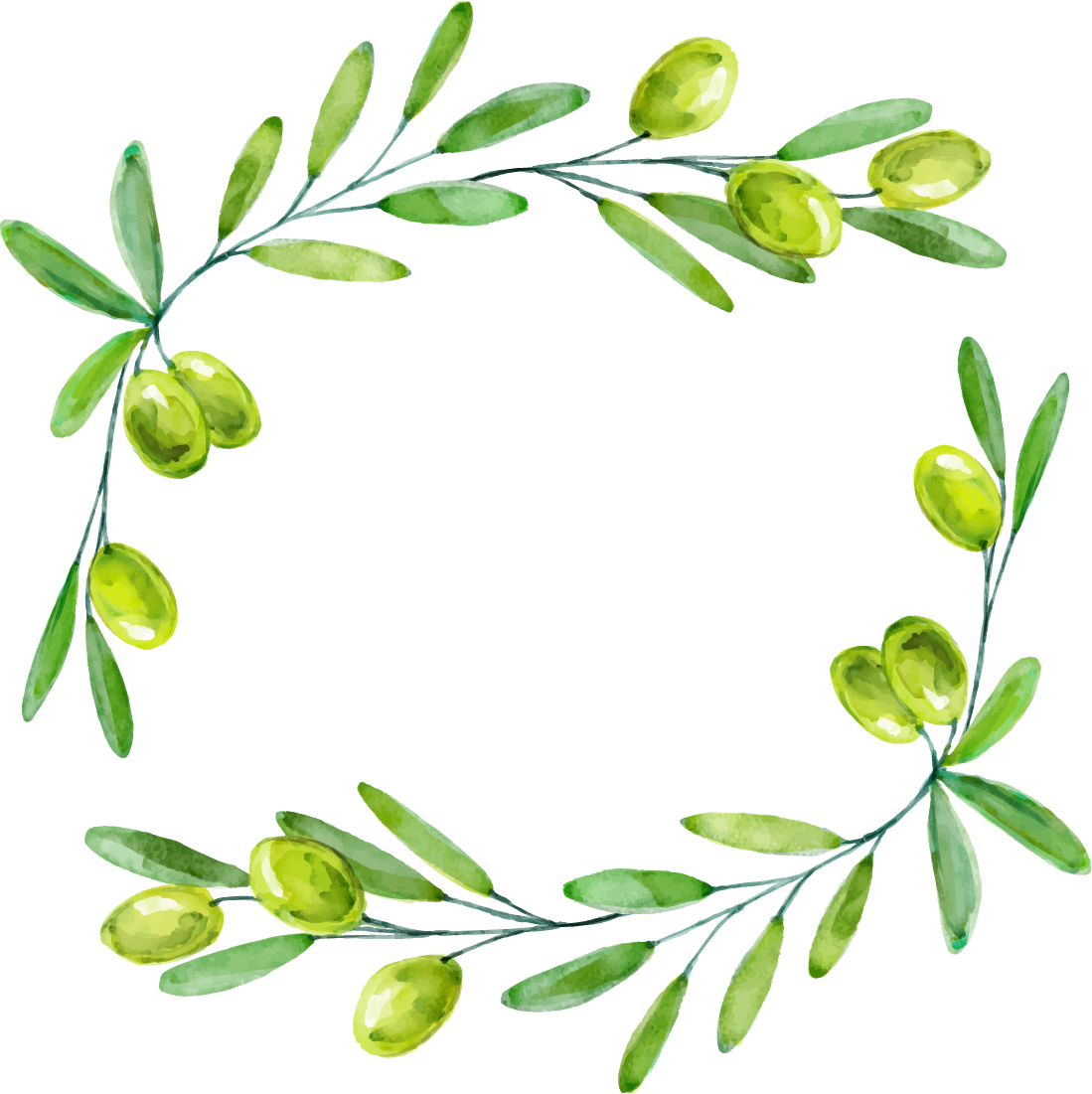 Watercolor olive branch png. Euclidean vector drawing green