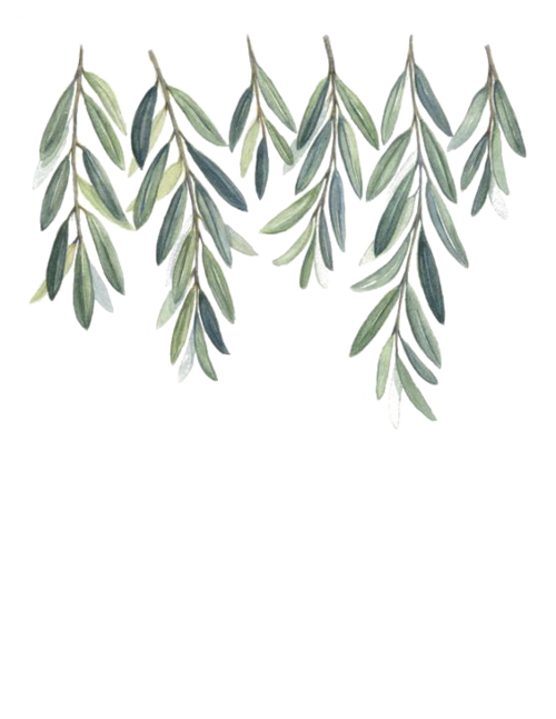 Watercolor olive branch png. Pricing jade strings fl