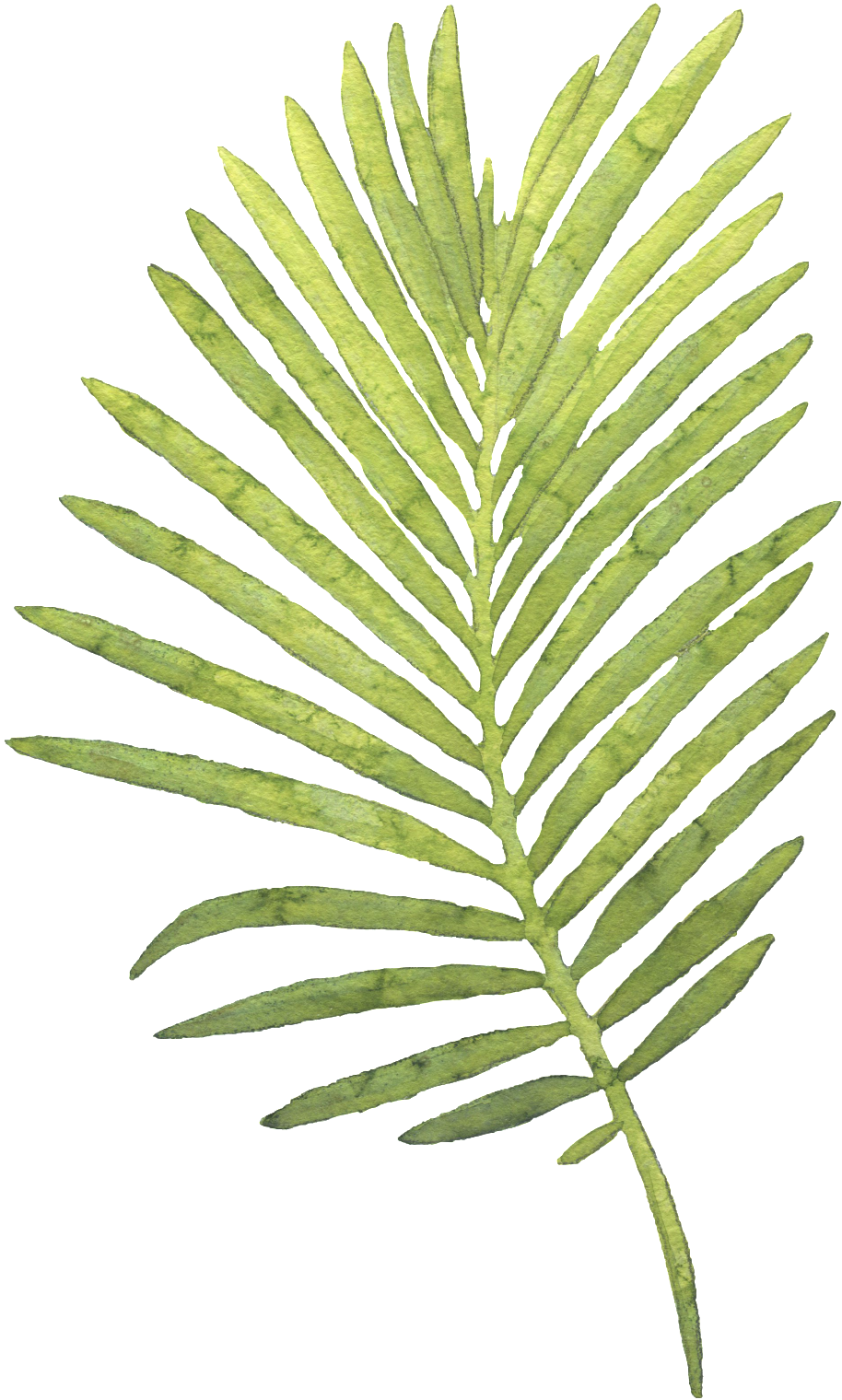 Watercolor palm leaves png. Download large piece of