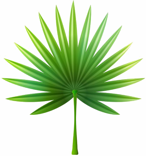 Watercolor palm leaves png. Images transparent free download