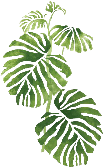 Watercolor palm leaves png. Trans par en cy