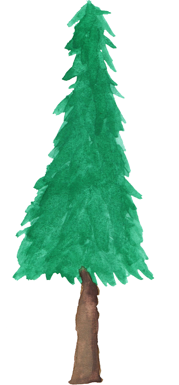 Watercolor tree png. Pine transparent onlygfx
