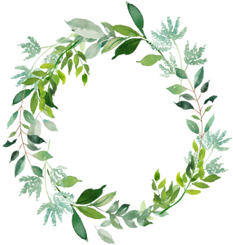 Watercolor silver leaf eucalyptus branch png free. Pin by marij olaerts
