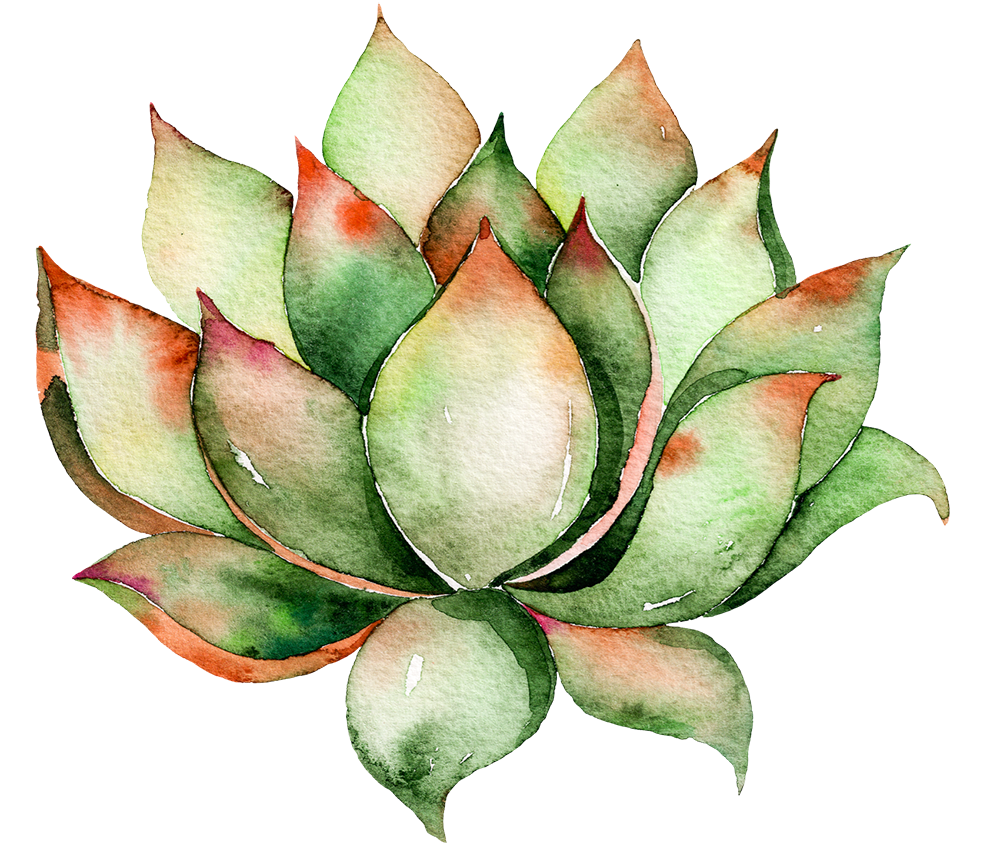 Watercolor succulent png. Cactaceae wall decal plant